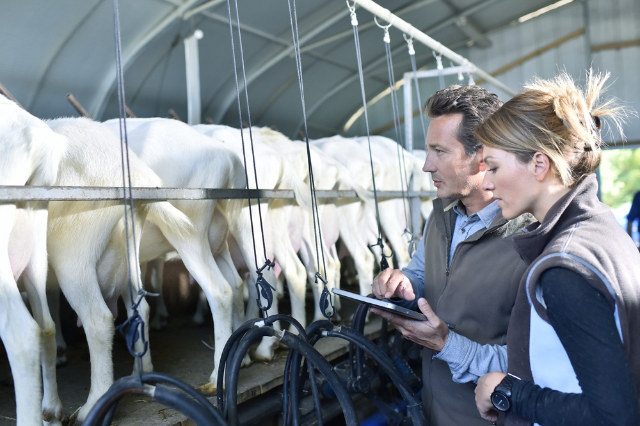 Farmers using tablet in milking barn.jpeg